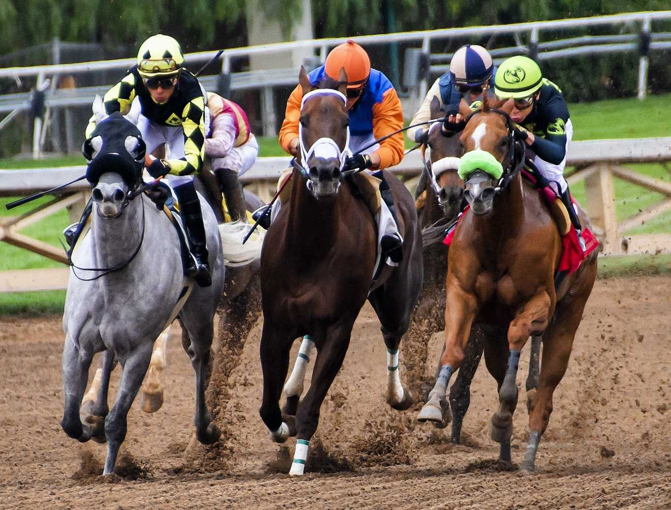 PMU horse racing